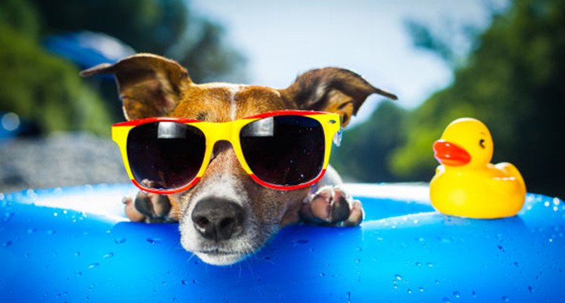 dog sunglasses adult pediatric eyecare local eye doctor near you